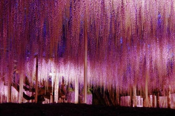 Цветна градина во Јапонија