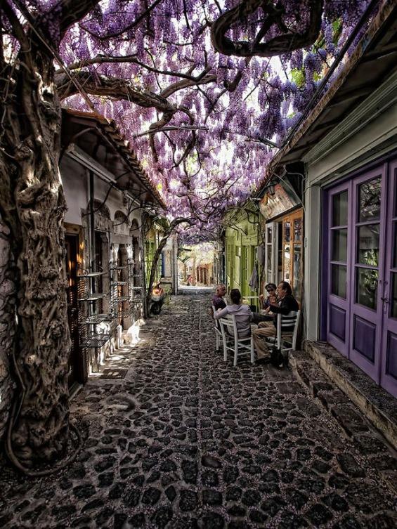 Улици со дрвја